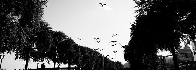 birdsb&wfar