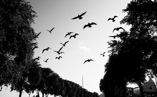 birdsb&wnear